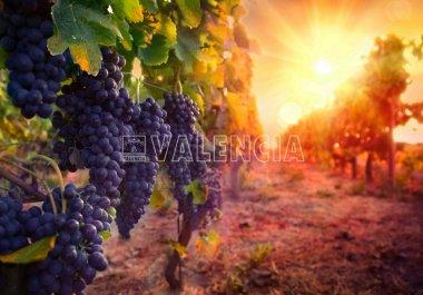 Винодельня в Ла-Риоха